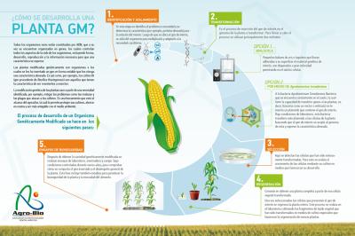 Como se produz uma planta geneticamente modificada?