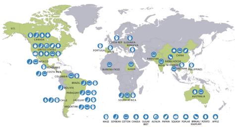 Culturas Transgenicas no Mundo 2015 - NAS-EUA