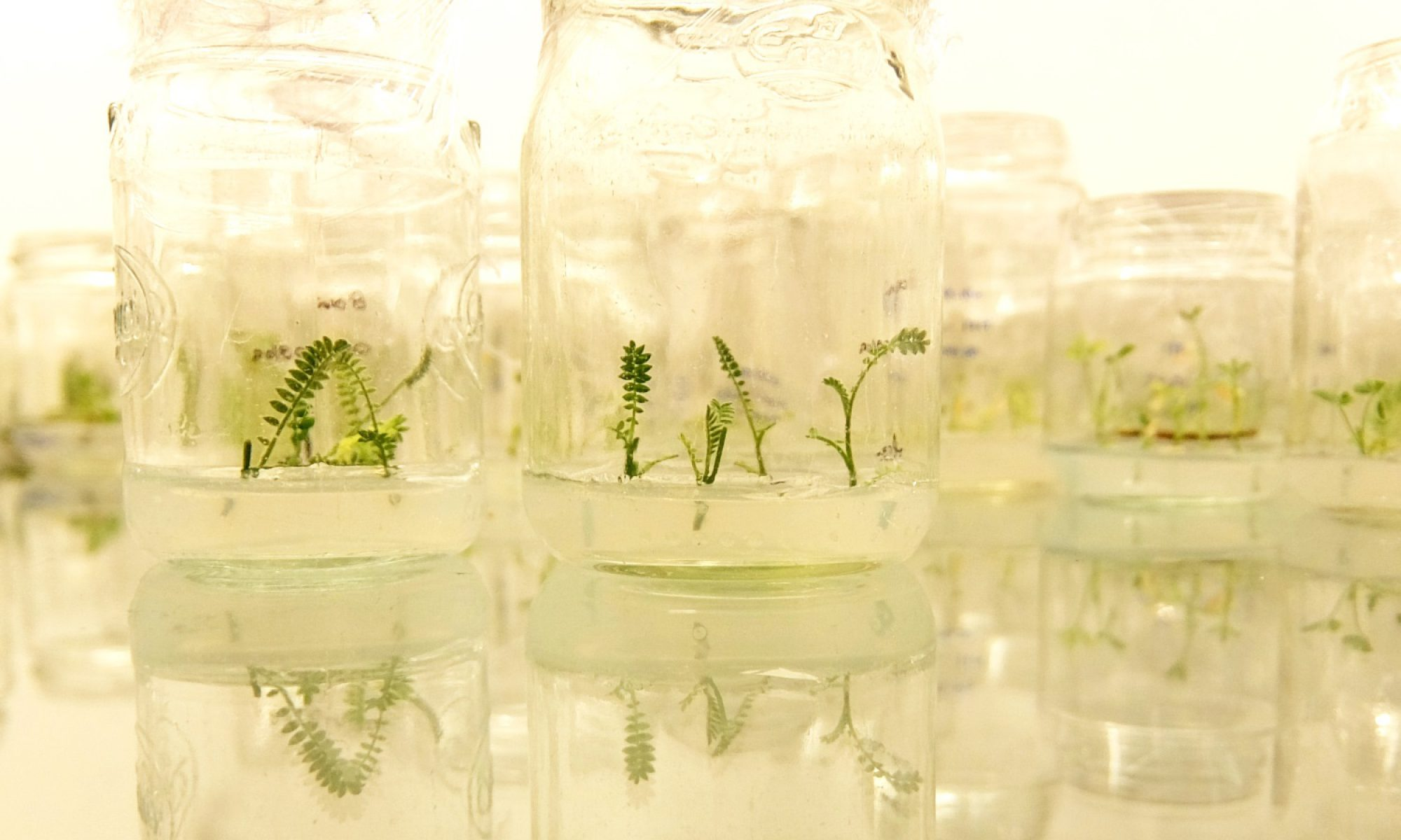 Biotecnologia e Melhoramento Genético para a Inovação