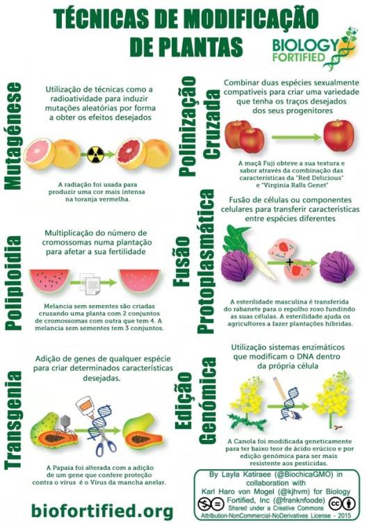 OGM, Transgénicos, Mutagénese, Polinização Cruzada, Poliplodia, Fusão Protoplasmática, Transgenia, Transgénicos, Engenharia Genética, Edição de Genoma, Edição de Genes, Melhoramento Genético, Melhramento de Plantas, Agricultura, Inovação, NBT
