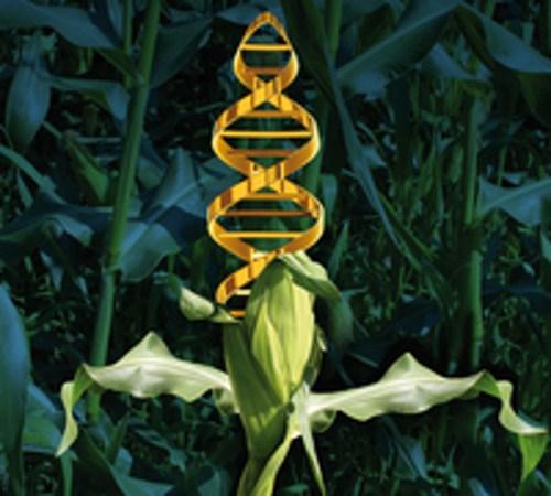 PBi - Plant Breeding Innovation