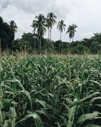 agricultura em áfrica