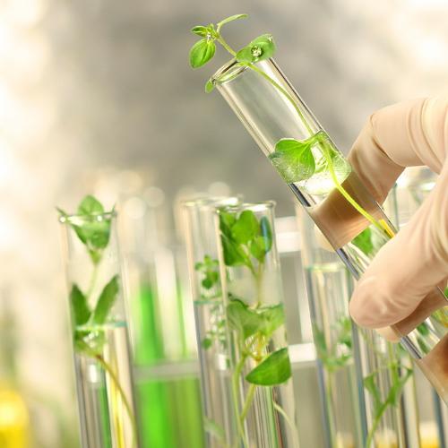 plant-tube-sq