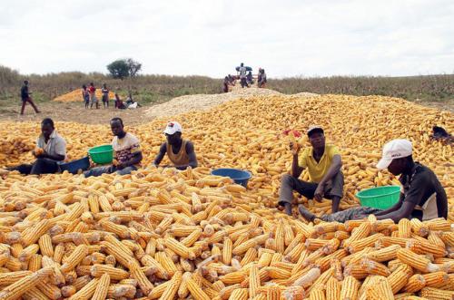 milho moçambique