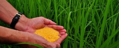 arroz_dourado